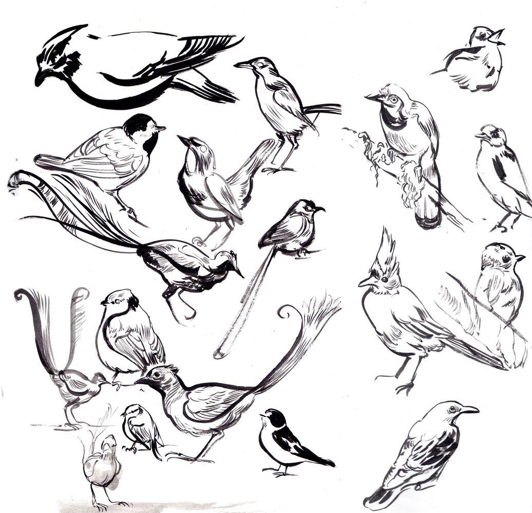Le Boiseleur, oiseaux © Hersent