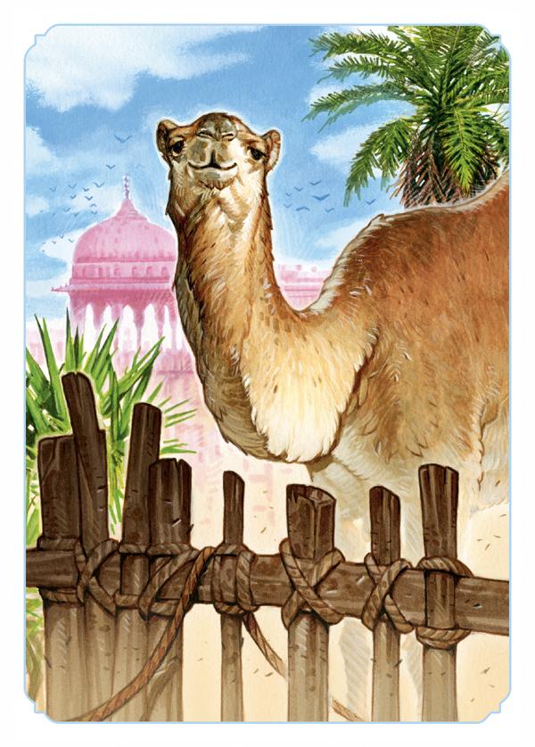 Jaipur, un chameau curieux © Space Cowboys / Dutrait / Pauchon