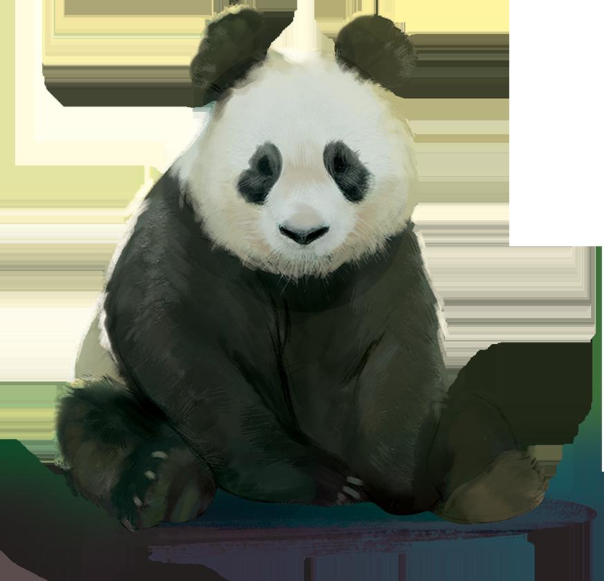 Planet, un magnifique panda © Blue Orange / Miramon / Sulinskas