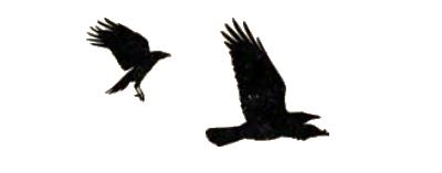 L'Auberge Sanglante, de bien funestes corbeaux © Pearl Games / Santiago / Robert