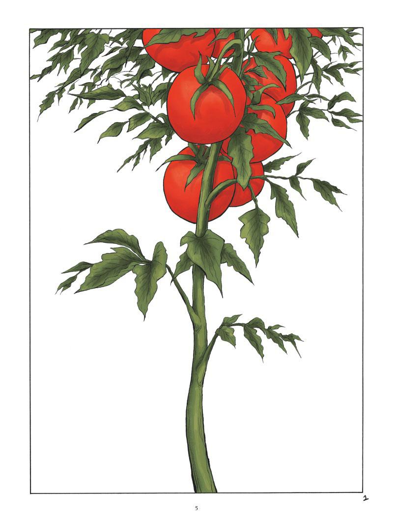 La Tomate, planche de l'album © Glénat / Penet / Reboul